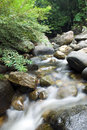 Peaceful flowing stream in  forest Stock Image