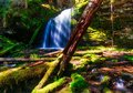 A peaceful moment at Fern Falls in Northern Idaho. Royalty Free Stock Photo