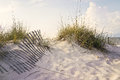 Peaceful morning in the beach sand dunes soft early sunlight paints and sea oats on a sandy accented by weathered wooden fences Stock Images