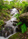 Peaceful mountain stream flows through lush forest doi inthano inthanon national park thailand Royalty Free Stock Photography
