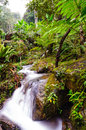 Peaceful mountain stream flows through lush forest doi inthano inthanon national park thailand Stock Images