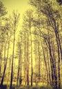 Peaceful Nature Vintage Backgr...