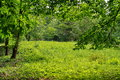 Magic place. Green nature. Relaxation and tranquility in the park. Summer landscape