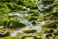 Peaceful Rocky Mountain Trout Stream Royalty Free Stock Photo