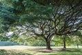 Peaceful tree rot fai park in thailand at vachirabenjatas Stock Photo