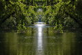 Peacefull water channel scene under flooded trees in danube delta Royalty Free Stock Image
