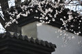Peach blossom and architecture in full bloom in march in the old building background is delicate charming moving Royalty Free Stock Photo