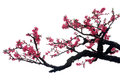 Peach blossom it is a beautiful white background Stock Photos