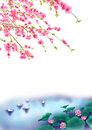 Peach or Cherry blossom Background in spring time