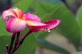 The Peach Flowers