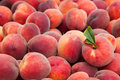 Peach fruits fresh and juicy Stock Photography