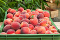 Peach fruits fresh and juicy in basket Royalty Free Stock Image