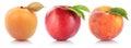 Peach nectarine apricot fruit fruits isolated on white Royalty Free Stock Photo