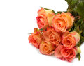 Peach roses bouquet isolated on white background Stock Photography