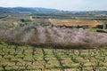 Peach trees in flowering period and vineyards san pau del ordal catalonia spain Stock Images