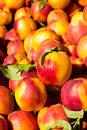 Peaches background Imagem de Stock Royalty Free