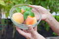 Peaches in hands Royalty Free Stock Photo