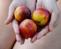 Peaches in the hands of women Royalty Free Stock Photo