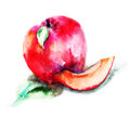 Peaches watercolor illustration of red Stock Photography