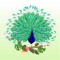 Peacock Beauty Tropical Bird O...