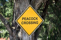 Peacock Crossing Sign Royalty Free Stock Photography