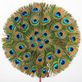 The peacock fan Royalty Free Stock Photo