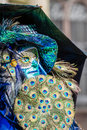Peacock fan schwaebisch hall germany february man dressed up in a venetian style costume holding a made of feather attends the Royalty Free Stock Photography