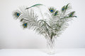 Peacock feathers in vase on white wood table isolated Stock Photo