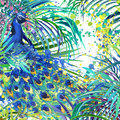 Peacock illustration tropical exotic forest green leaves wildlife bird peacock watercolor illustration background unusual nature Royalty Free Stock Photo