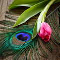 Peacocks feather and tulip on wooden board Royalty Free Stock Photography