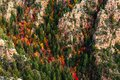Fall colors in a canyon on the Mogollon Rim, Arizona. Royalty Free Stock Photo
