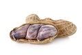 Peanut nut goober ground nut monkey nut on white background Royalty Free Stock Images