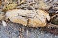 Peanut shell on ground Stock Photo