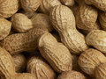 Peanuts a full frame peanut background Royalty Free Stock Images