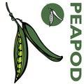 Peapod Royalty Free Stock Photo