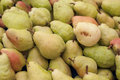 Pear harvest for vegetable market Royalty Free Stock Photography