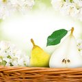 Pear with slice photo of and in a basket blossom background Stock Photography
