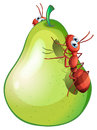 A pear with two ants illustration of Royalty Free Stock Photography