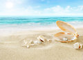 Pearl on the beach. Royalty Free Stock Photo