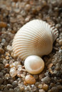 Pearl lies on sand with cockleshells the Royalty Free Stock Photography