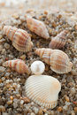 Pearl lies on sand with cockleshells the Royalty Free Stock Image
