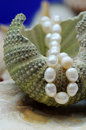 Pearl necklace and sea shell Royalty Free Stock Photography
