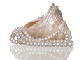Pearl necklace in a seashell on white background. Royalty Free Stock Photo
