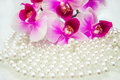 Pearl and purple orchid Royalty Free Stock Photo