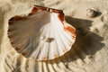 Pearl in the seashell top view on white beautiful on sand Royalty Free Stock Photography