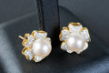Pearls earrings on jewelry box Royalty Free Stock Images