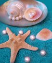 Pearls and shells Stock Photography