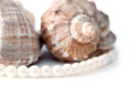 Pearls and shells on a white board Royalty Free Stock Photo