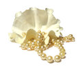 Pearly  necklace, large shells coral beads Royalty Free Stock Photo