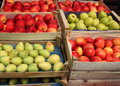Pears and apples different varieties placed in wooden boxes Stock Photos